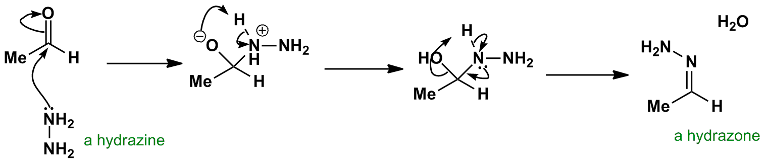 Carbonyl Addition - Loss of carbonyl oxygen Hydrazone formation is ...